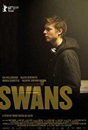 Swans 2011